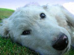 cane morto carbonizzato