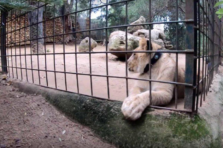 zoo chiuso