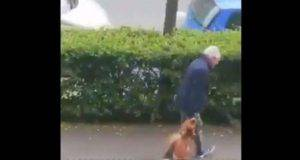 francia cane ucciso