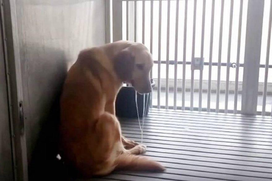 abusi esperimenti animali