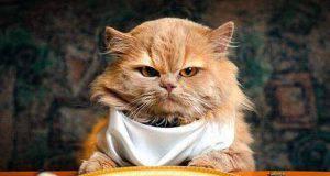 Dieta gatto