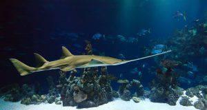 animali marini elenco specie
