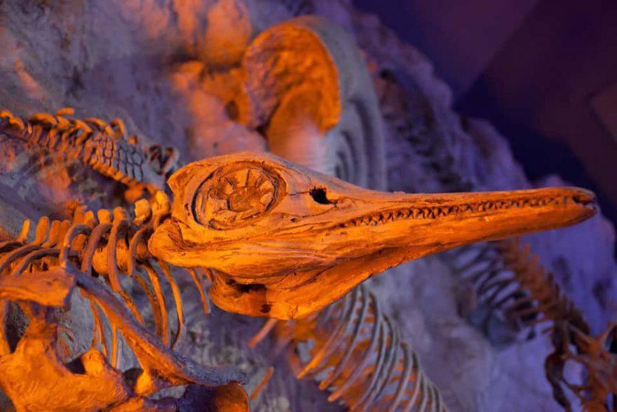 animali marini fossili