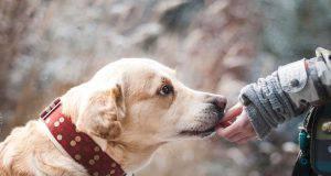 perchè adottare un cane