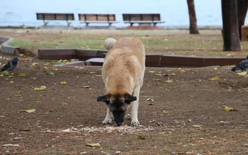 cane muove terra dopo defecazione