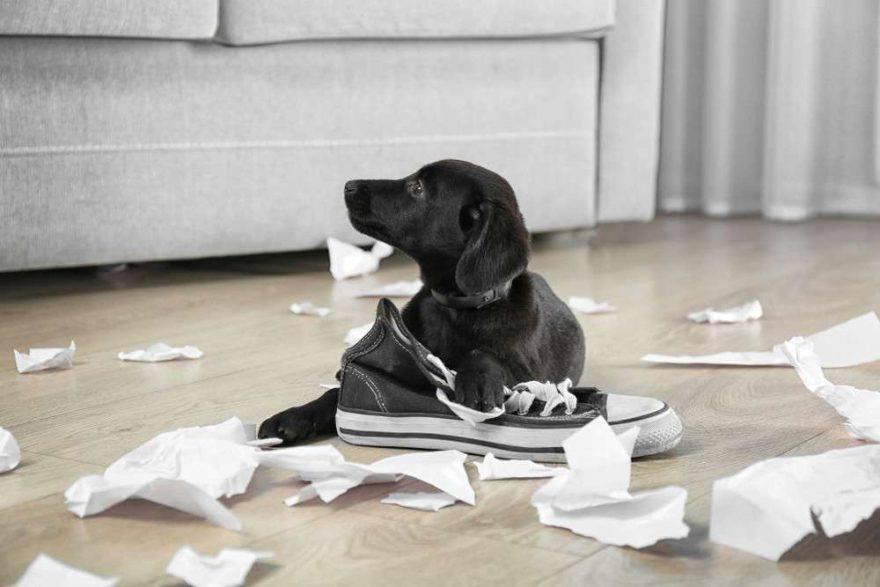cane mangia tutto quello che trova