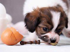 Cani e uova