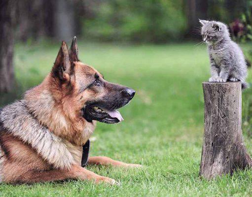 Pulci e zecche su cani e gatti