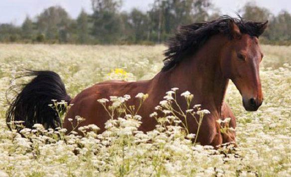 razze equine