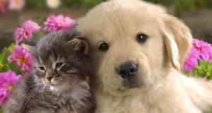 Zecche e pulci nei cuccioli