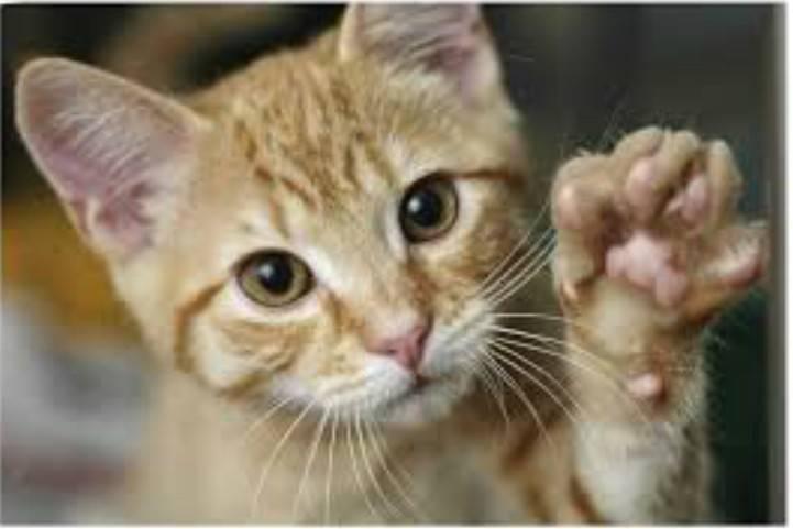gatto animale guida