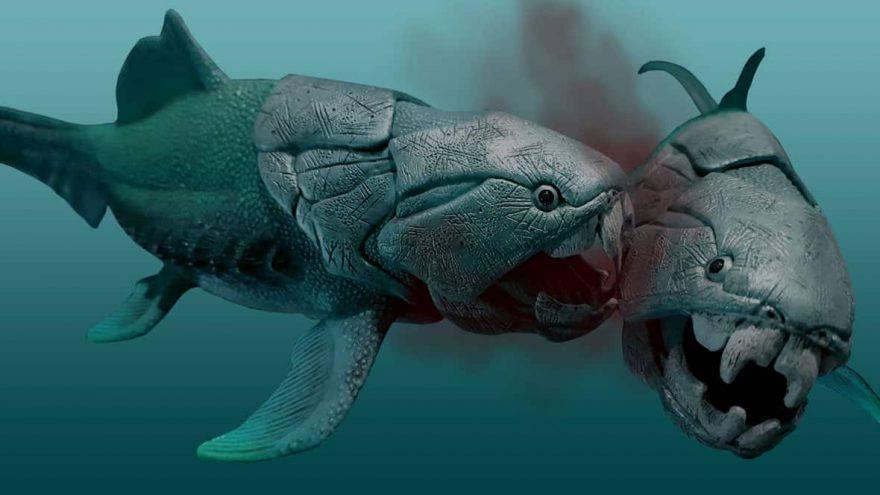 predatori marini