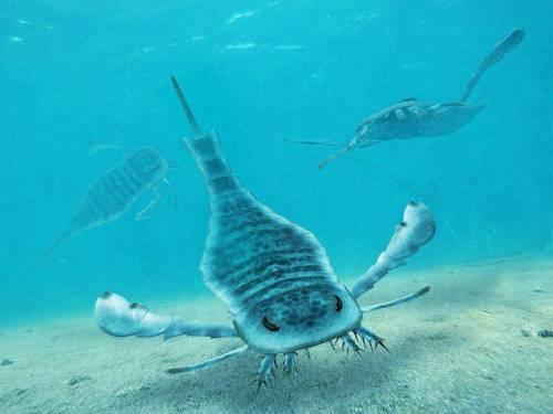 scorpione di mare