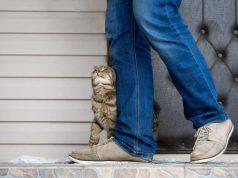 Gatto si struscia