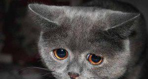 Gatto depresso: soluzioni