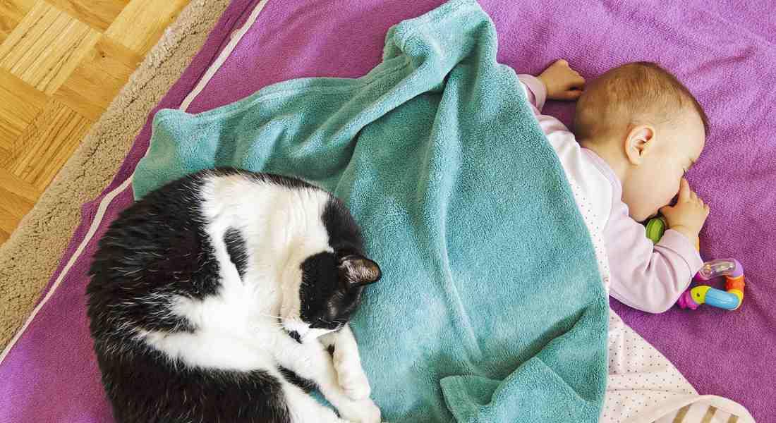 gatto neonato rapporto