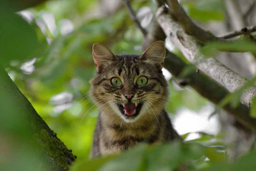 il gatto ha paura di me