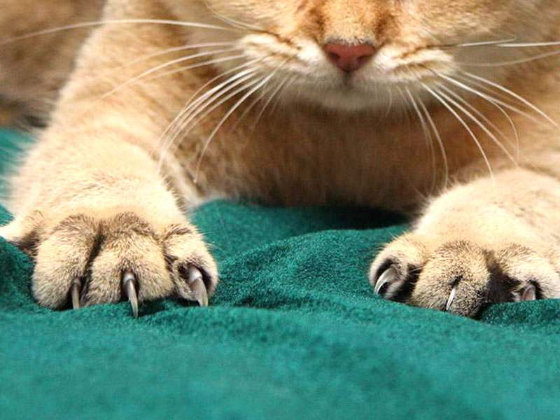 unghie gatto graffi