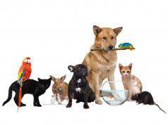 animali domestici elenco