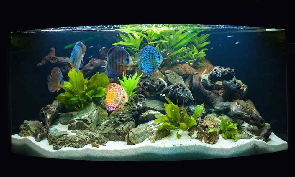 motivazioni pesci si inseguono