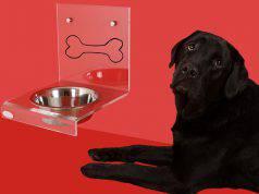 quanto deve mangiare un cane