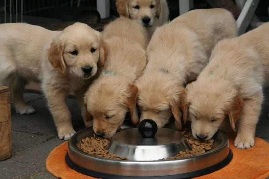 cucciolo cane quantità cibo