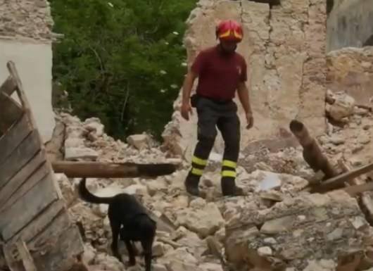 cane da soccorso terremoto
