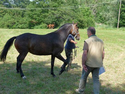 Cavallo del Ventasso