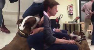 cane testimone processo