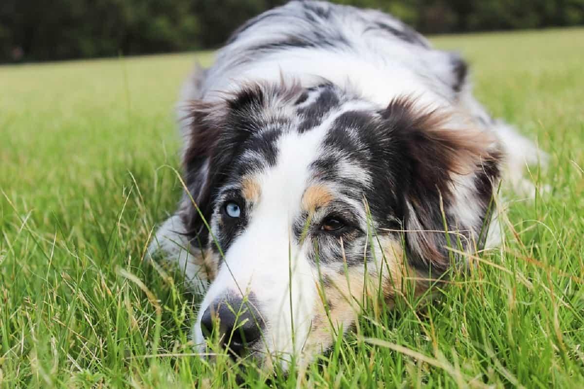 cane non curato