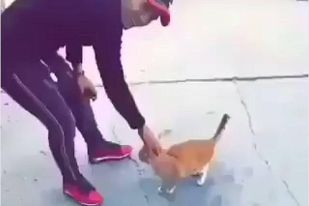 gatto preso calci