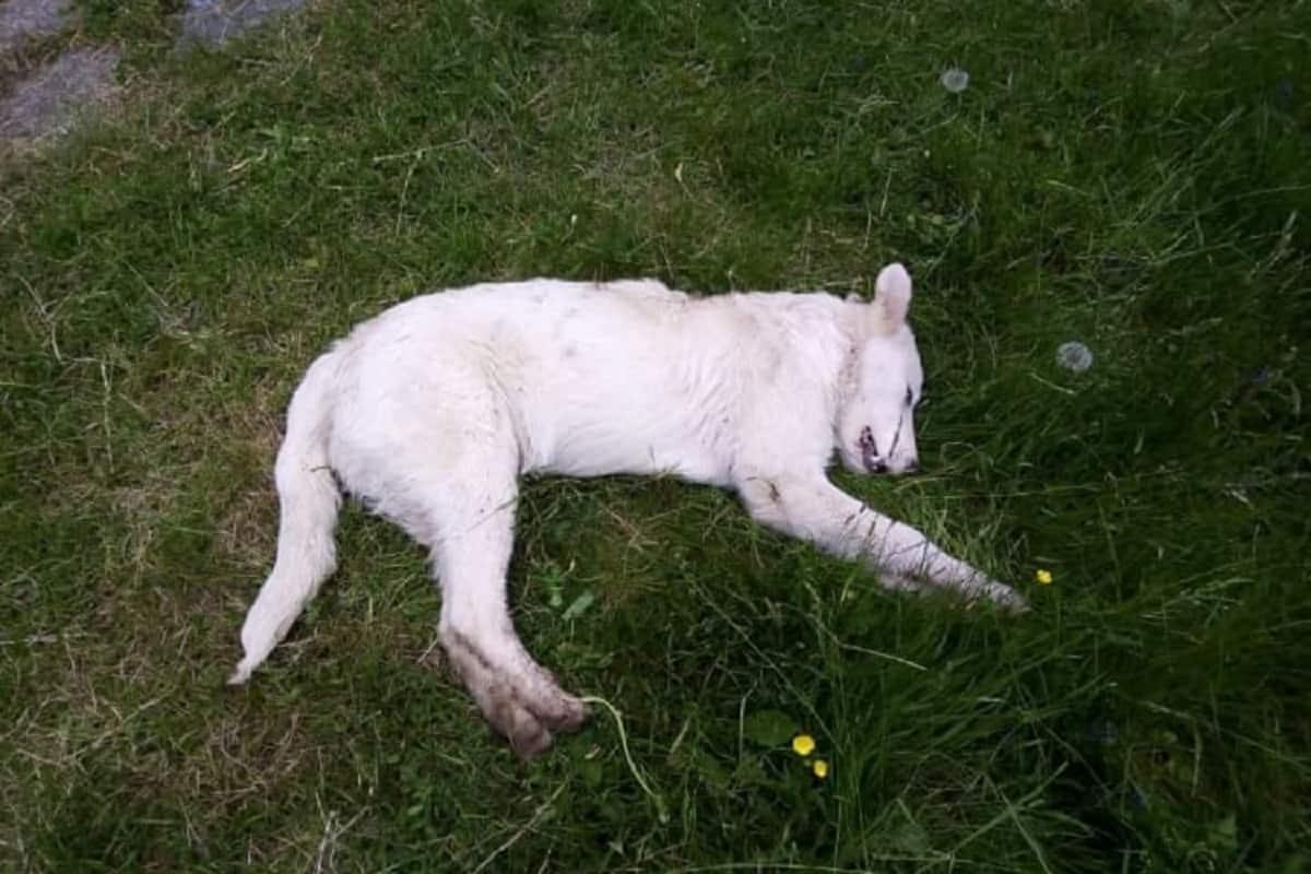 ucciso cane bastonate