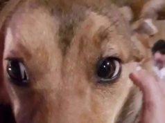 agrigento cane abbandonato