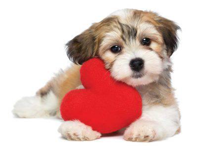 Arresto cardiaco cane