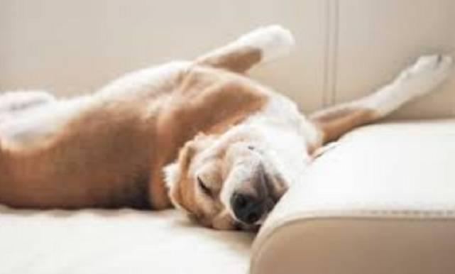 come rilassare il cane
