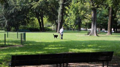 Cane in spazi verdi della città