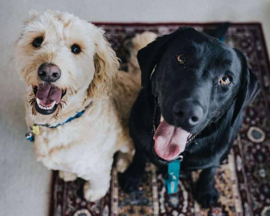 convivenza tra cani