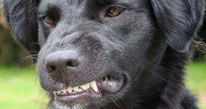 Cane soffre di nervosismo