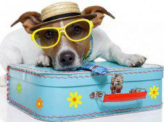 Cani in vacanza
