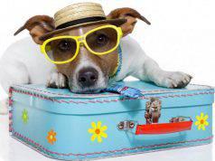 Cani in vacanza