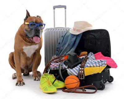 aereo cane animale domestico