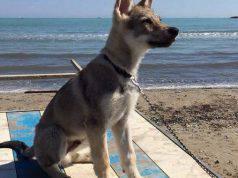 Cani in spiaggia 2019
