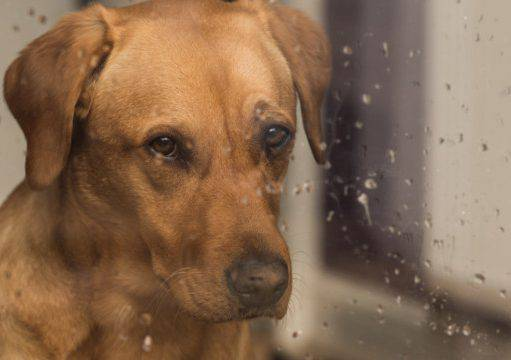 Cani vs pioggia