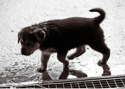 Cani odiano la pioggia