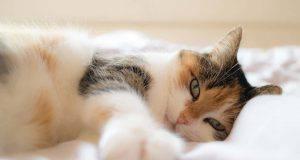 gatto fa rumore quando respira