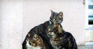 colonie feline gatti in condominio