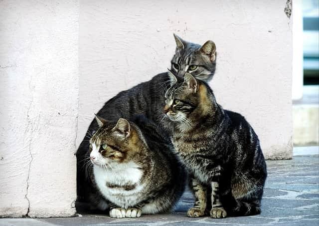 colonia felina gatti in condominio