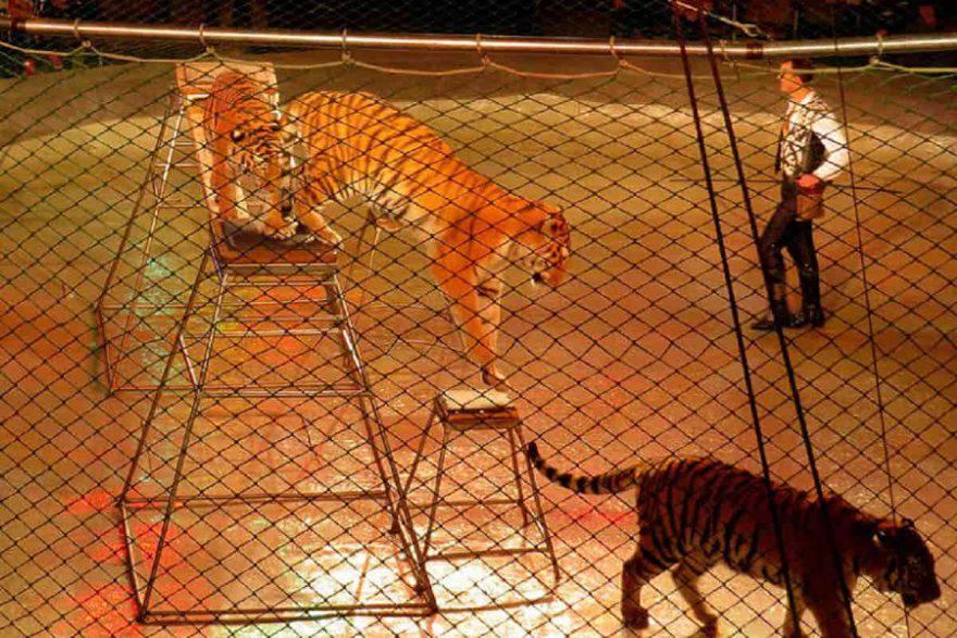 regno unito animali circhi