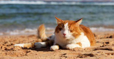 Gatto e caldo