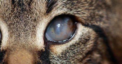occhio affetto da congiuntivite